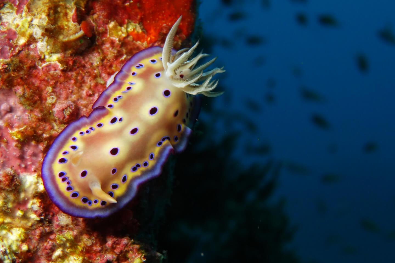 under water creature
