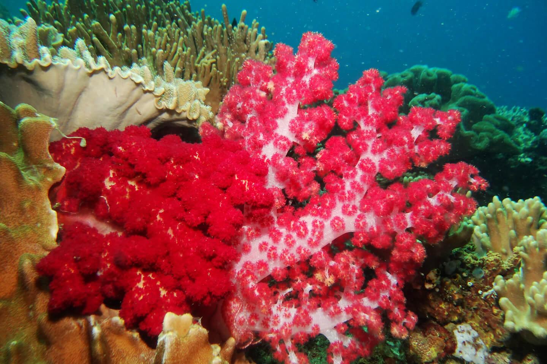 pink coral bali