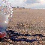 jellyfish stranded bali