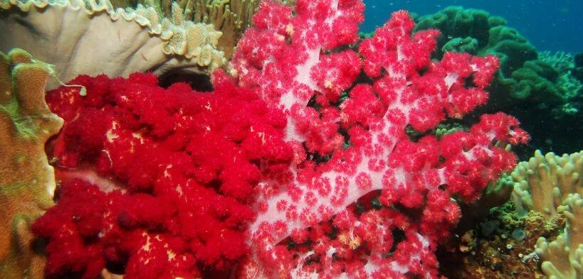Be Reef Resistance