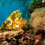 Leaf fish yellow