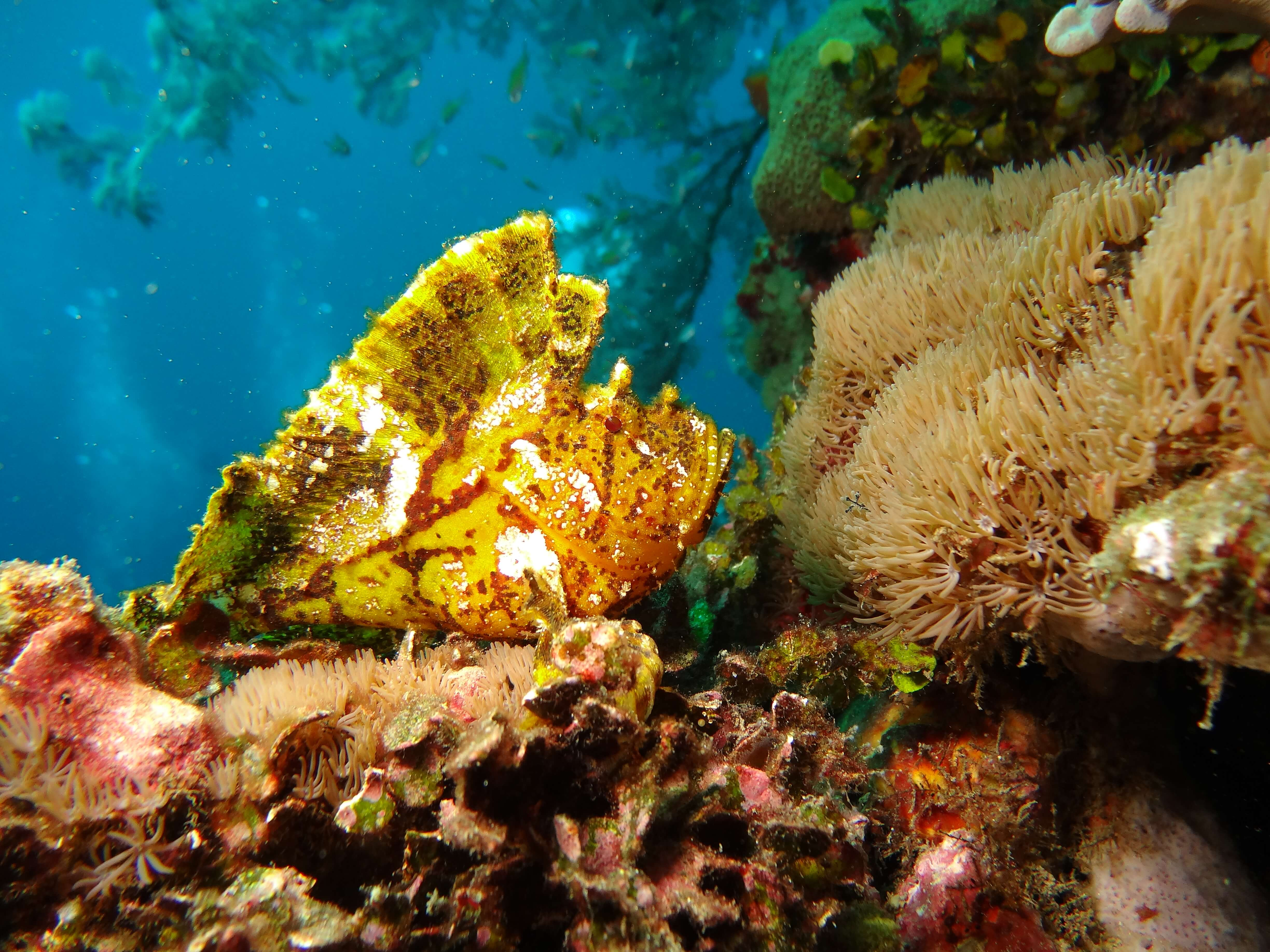 environmentally friendly - don't touch coral reefs