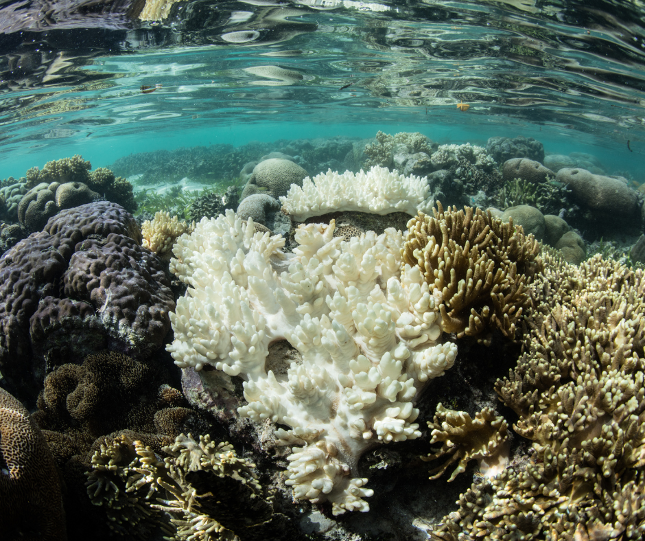 Coral reefs threat : Coral bleached