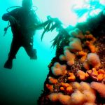 diving with corals