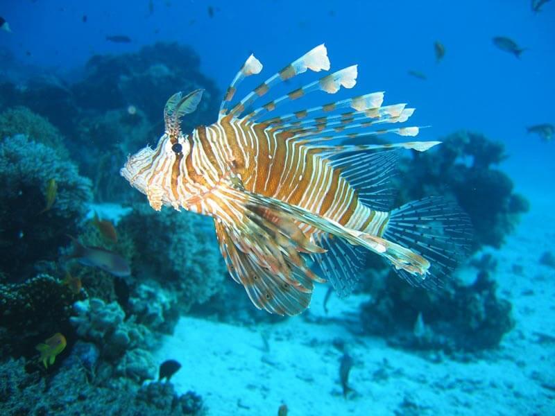 Alien Like Sea Animals