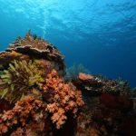 Drift Diving Bali abyss Ocean world
