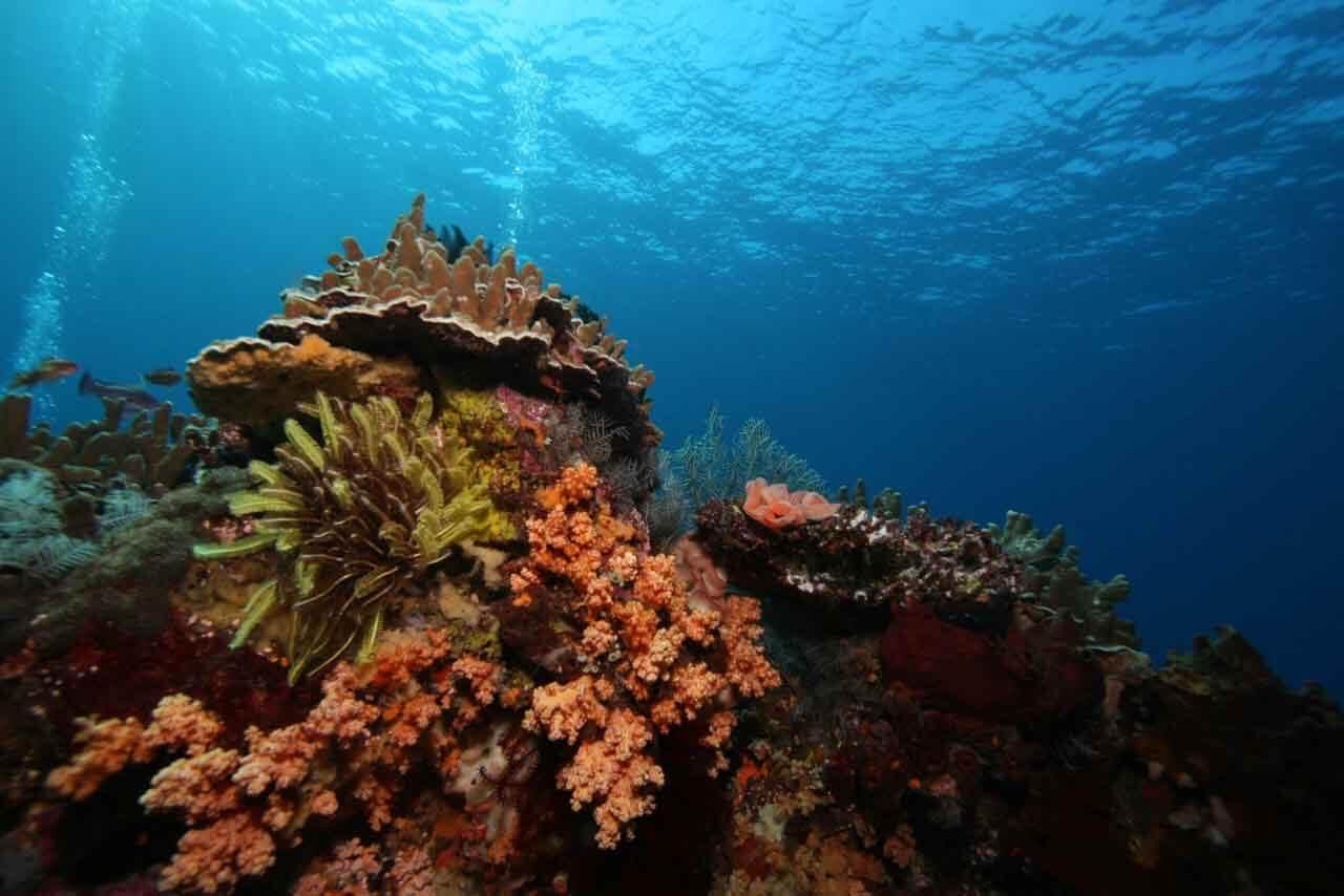 Drift Diving Bali - abyss Ocean world