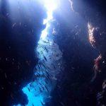 Menjangan Island - Pos 2 Safari Dive