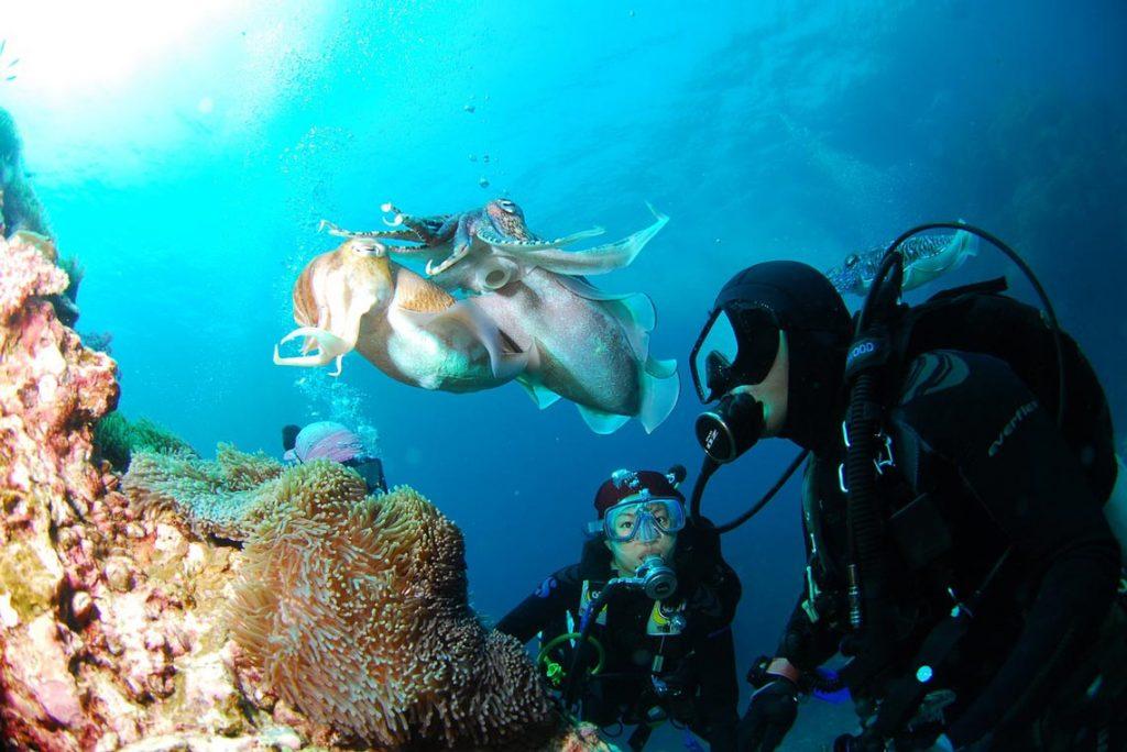 padi course - diving in pemuteran