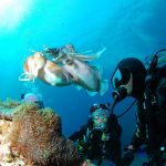 padi course - diving in pemuteran - PADI Open Water