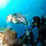 padi course - diving in pemuteran - PADI Open Water