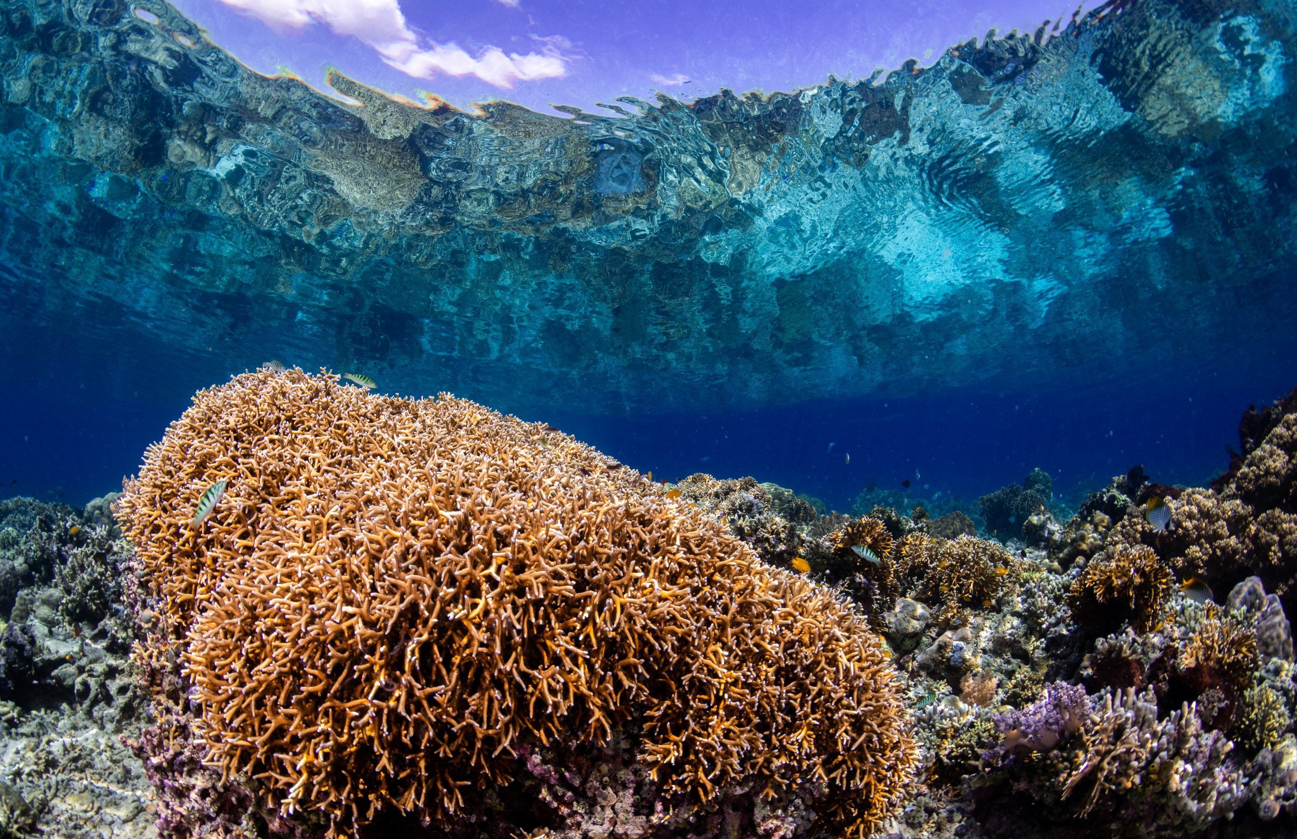 Healthy coral reef view from under with crystal water letting us see the topography outside of the water.