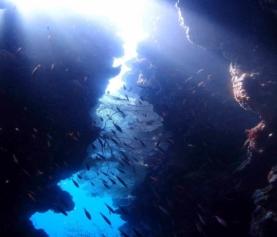 Safari Dive In Menjangan Island – Diving in Bali