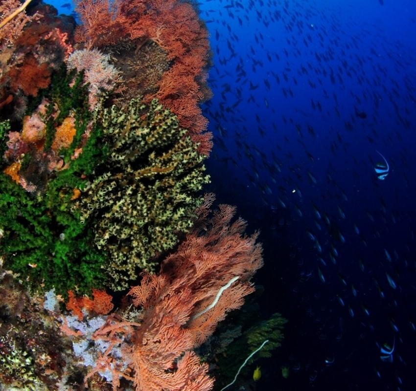 SC 053 alor coral reef-2